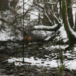 deer2 snow